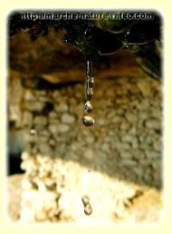 La paroie rocheuse filtre l'eau douce ...