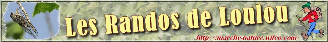 Les Randos de Loulou_Calanques_Sainte Baume_Alpes - Herbier de la flore des calanques et de montagne