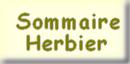 Aller au sommaire principal de l'Herbier de Loulou ...