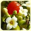 Daphne gnidium (Daphné garou) - Flore des Calanques - Herbier de Loulou