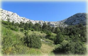 Vallon de l`herbe - Calanques - Marseille