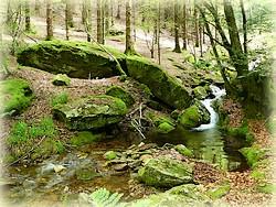 Randonnée forêt de Beson_Tarn_Ruisseau de veyries_Les Randos de Loulou