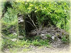 Randonnée forêt de Beson_Tarn_Les Clottes_Les Randos de Loulou