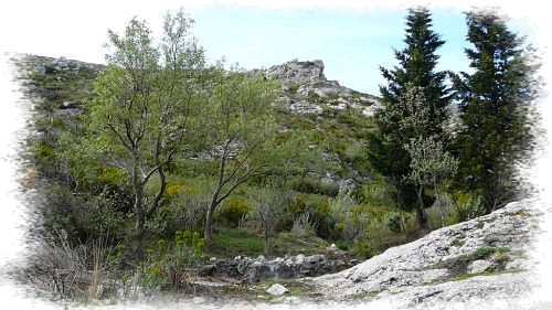 Source eaux vives Parc Calanques - Massif Saint-Cyr - Les Randos de Loulou